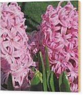 Pink Hyacinth Wood Print