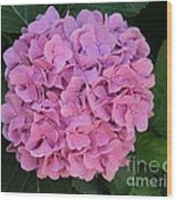 Pink Hydrangea All Profits Benefit Hospice Of The Calumet Area Wood Print