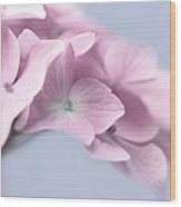 Pink Hydrangea Flower Macro Wood Print