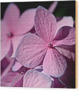 Pink Hydrangea Wood Print by Rona Black