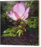 Pink Illumination Wood Print
