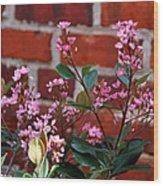 Pink Indian Hawthorne Wood Print
