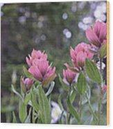 Pink Indian Paintbrush Wood Print