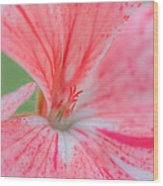 Pink Is Beautiful Wood Print