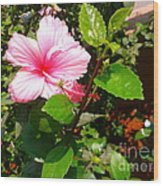 Pink Java Flower  Wood Print
