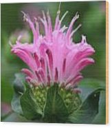Pink July Wood Print