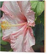 Pink Lady 2013 Wood Print