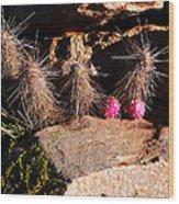 Pink Lady Cactus Wood Print