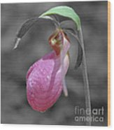 Pink Lady Slipper Partial Color Wood Print