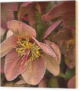 Pink Lenten Rose Wood Print
