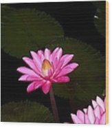 Pink Lilies And Pads Wood Print