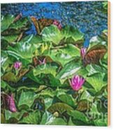 Pink Lilly Flowers And Pads Wood Print