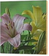 Pink Lilly Wood Print
