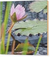 Pink Lily And Pads Wood Print