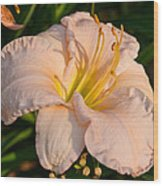 Pink Lily At Sunset 1 Wood Print