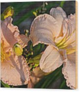 Pink Lily At Sunset 2 Wood Print