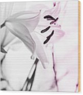 Pink Lily Feature Wood Print