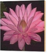 Pink Lily Flower Wood Print