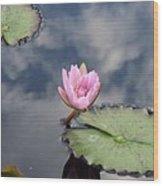 Pink Lily Monet Wood Print