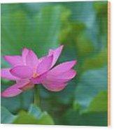 Pink Lotus Blossom Wood Print