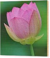 Pink Lotus Bud  Wood Print