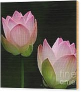 Pink Lotus Duet Wood Print