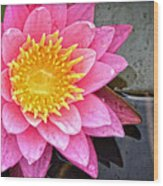 Pink Lotus Flower - Zen Art By Sharon Cummings Wood Print
