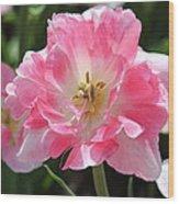Pink Love Tulip Wood Print