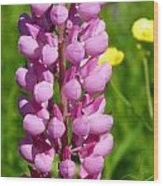 Pink Lupine Flower Wood Print