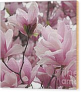 Pink Magnolia Blossoms Washington Dc Wood Print
