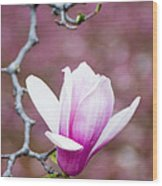 Pink Magnolia Flower Wood Print
