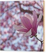 Pink Magnolia Wood Print by Rona Black