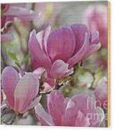 Pink Magnoloias In Bloom Wood Print