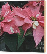 Pink Marble Poinsettia Wood Print