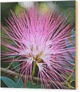 Pink Mimosa Flower Wood Print