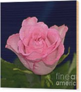 Pink Mist 8498 Wood Print