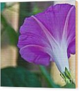 Pink Morning Glory Wood Print