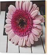 Pink Mum On Piano Keys Wood Print