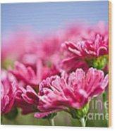Pink Mums Wood Print by Elena Elisseeva