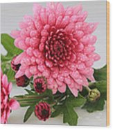 Pink Mums Wood Print