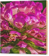 Pink Mystery Flower Wood Print