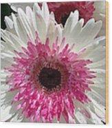 Pink N White Gerber Daisy Wood Print