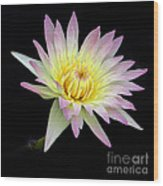 Pink N Yellow Water Lily Too Wood Print