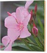Pink Oleander 5 Wood Print