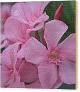 Pink Oleander 6 Wood Print
