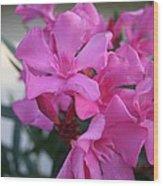 Pink Oleander Bunch Wood Print