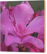 Pink Oleander Flower With Green Leaves In The Background   Wood Print