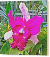 Pink Orchid At Maerim Orchid Farm In Chiang Mai-thailand Wood Print