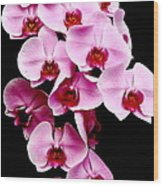 Pink Orchid Wood Print