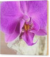 Pink Orchid On White Colored Driftwood Wood Print by Sabine Jacobs